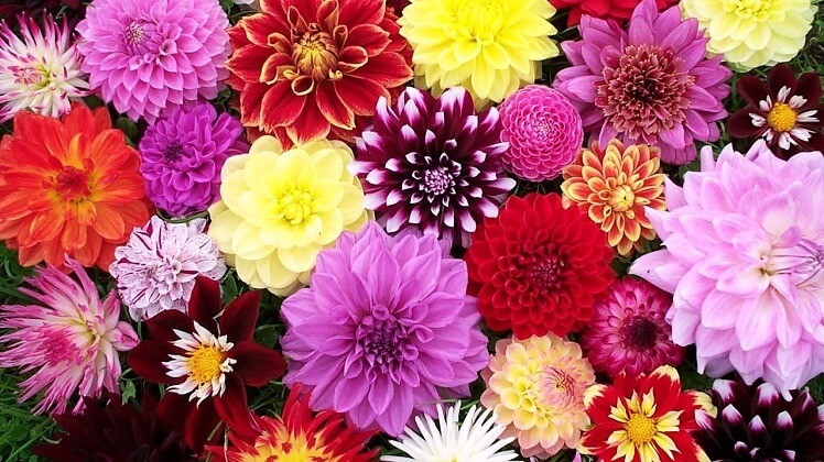 most beautiful flowers in the worls